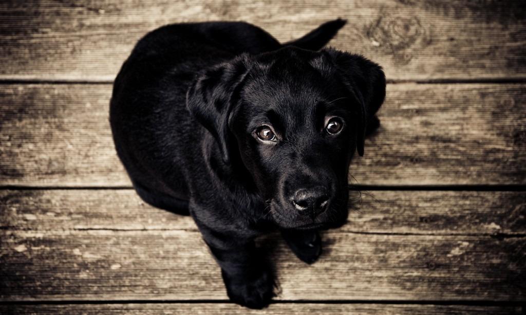 puppy-love